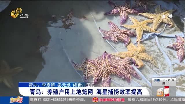 青岛:养殖户用上地笼网 海星捕捞效率高