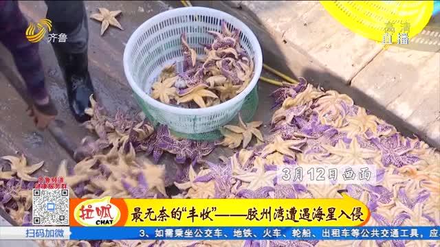 青岛:还在担心海星吃海蛎子?再不买就吃不上了!