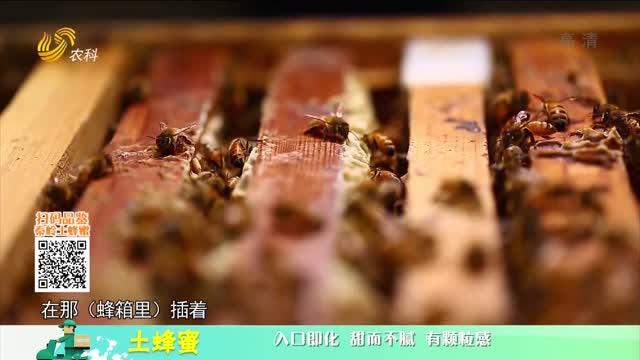 20210327《中国原产递》:土蜂蜜