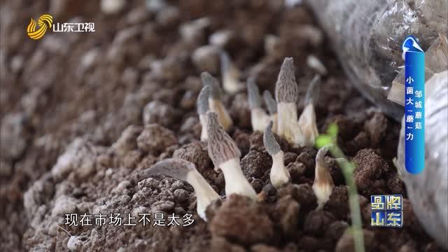 """【品牌馨对话】邹城蘑菇 小菌大""""蘑""""力"""