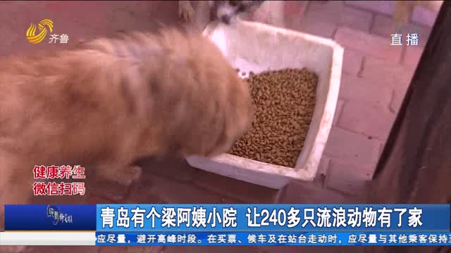 青岛有个梁阿姨小院 让240多只流浪动物有了家