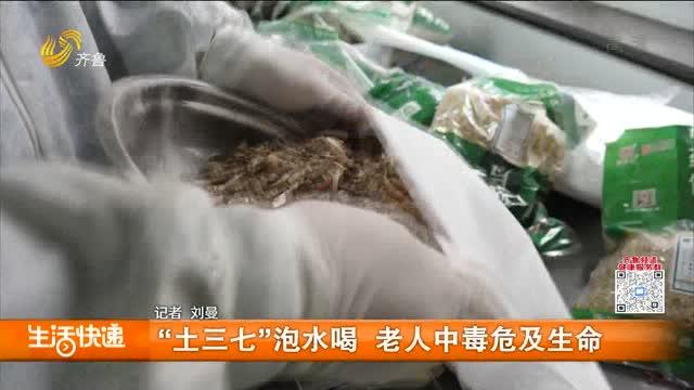 """""""土三七""""泡水喝 老人中毒危及生命"""
