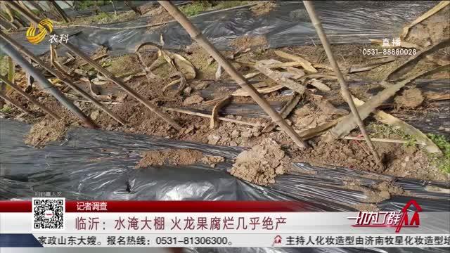 【记者调查】临沂:水淹大棚 火龙果腐烂几乎绝产