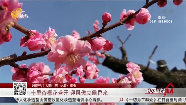 【阳春三月 大美山东】十里杏梅花盛开 迎风傲立幽香来