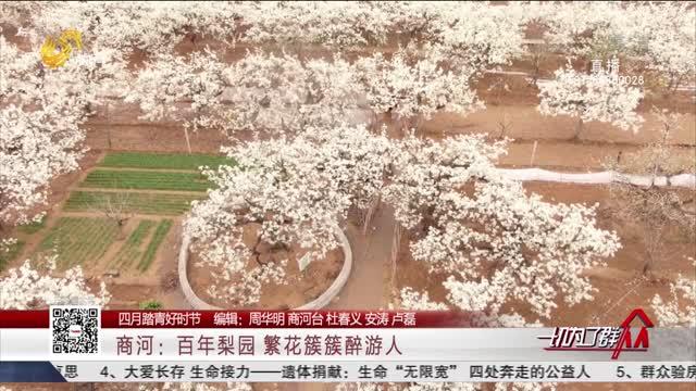 【四月踏青好时节】商河:百年梨园 繁花簇簇醉游人