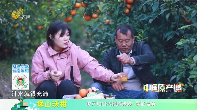 20210404《中国原产递》:保山沃柑