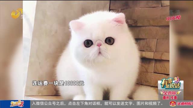 青岛:万元加菲猫 宠物医院意外死亡?