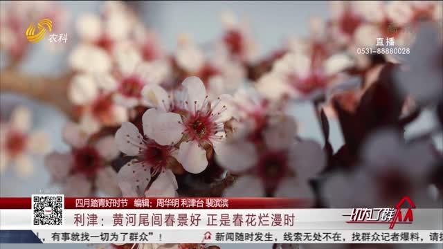 【四月踏青好时节】利津:黄河尾闾春景好正是春花烂漫时