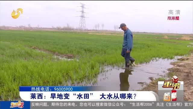 """【重磅】莱西:旱地变""""水田""""大水从哪来?"""
