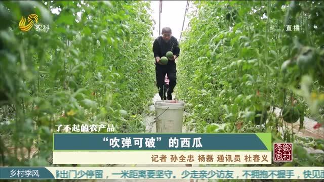"""【农大腐植酸 了不起的农产品(七)】""""吹弹可破""""的西瓜"""