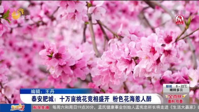 泰安肥城:十万亩桃花竞相盛开 粉色花海惹人醉