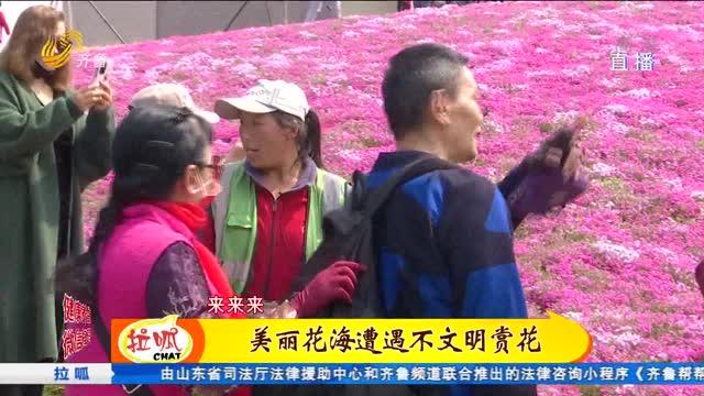 危险不?街头花海进入盛花期 记者劝说赏花市民却被怼