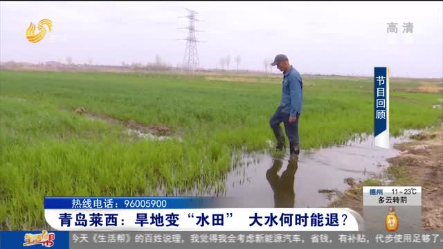 """青岛莱西:旱地变""""水田"""" 大水何时能退?"""