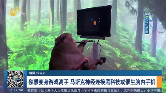 猕猴变身游戏高手 马斯克神经连接黑科技或催生脑内手机