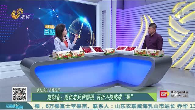"""【乡村振兴 有我站长】赵阳春:退伍老兵种樱桃 百折不挠终成""""果"""""""