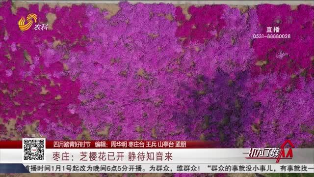 【四月踏青好时节】枣庄:芝樱花已开静待知音来