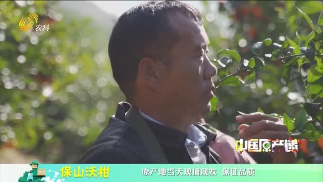 20210413《中国原产递》:保山沃柑