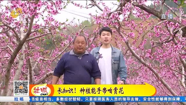 肥城:又到一年游春时 人面桃花相映红