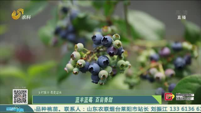 【乡村振兴 有我站长】蓝丰蓝莓 百亩香甜