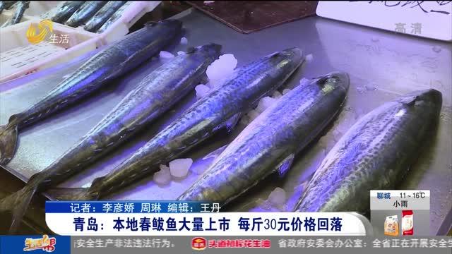 青岛:本地春鲅鱼大量上市 每斤30元价格回落