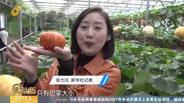 """【第二十二届菜博会】记者观察:寿光蔬菜的""""七十二变"""""""