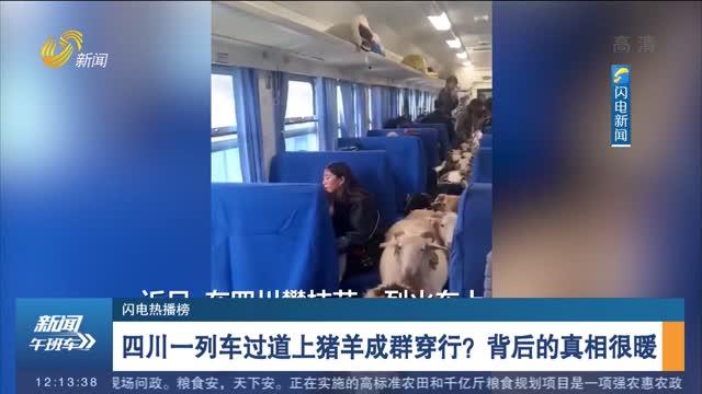 【闪电热播榜】四川一列车过道上猪羊成群穿行?背后的真相很暖
