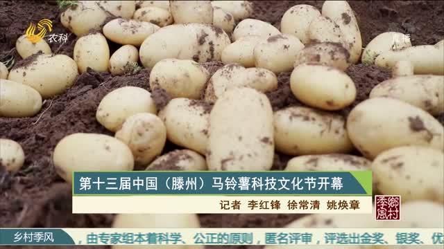 第十三屆中國(滕州)馬鈴薯科技文化節開幕