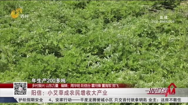 【乡村振兴 山东力量】阳信:小艾草成农民增收大产业