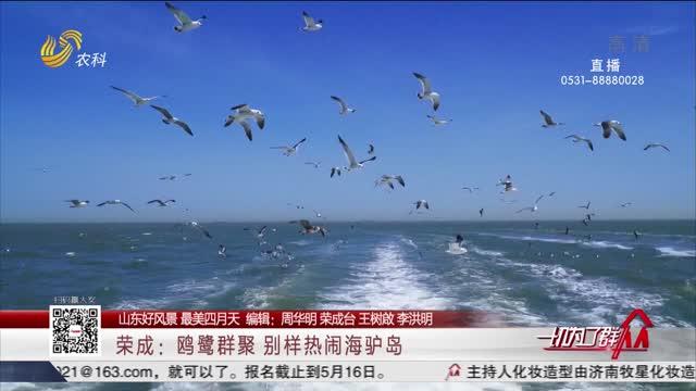 【山東好風景 最美四月天】榮成:鷗鷺群聚 別樣熱鬧海驢島