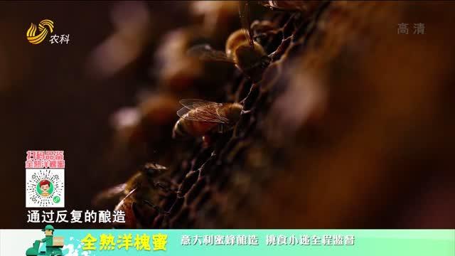 20210430《中国原产递》:全熟洋槐蜜