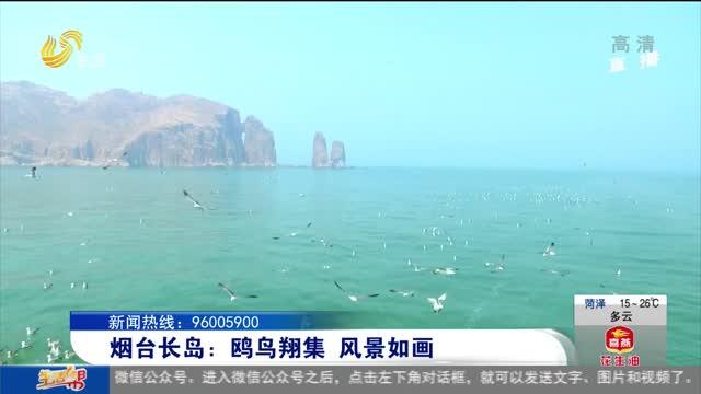 烟台长岛:鸥鸟翔集 风景如画