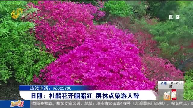 日照:杜鹃花开胭脂红 层林点染游人醉