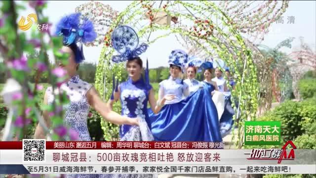 【美丽山东 邂逅五月】聊城冠县:500亩玫瑰竞相吐艳 怒放迎客来