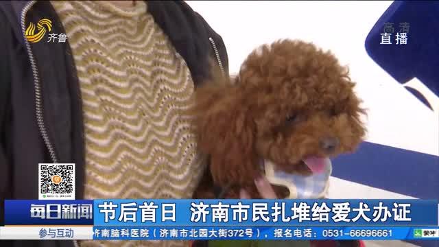 节后首日 济南市民扎堆给爱犬办证