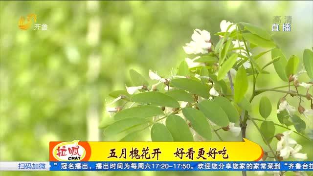 原浆油健康菜:揭秘槐花宴压轴冠军菜——槐花丸子