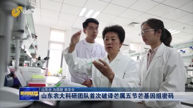 山东农大科研团队首次破译芒属五节芒基因组密码