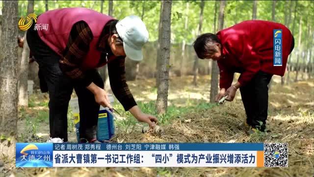 """省派大曹镇第一书记工作组:""""四小""""模式为产业振兴增添活力"""