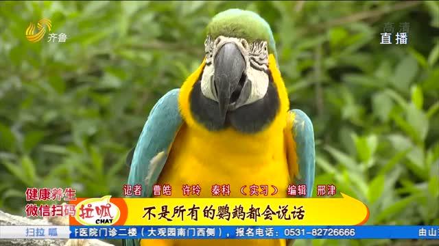 青岛:它把自己当成人!你这鹦鹉咋找另一半?