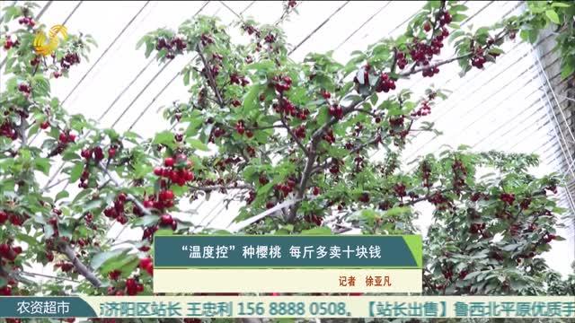 """""""温度控""""种樱桃 每斤多卖十块钱"""