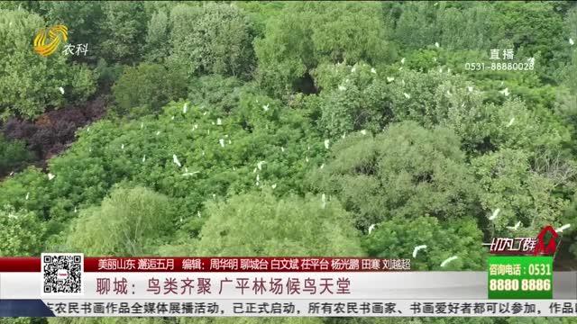 【美丽山东 邂逅五月】聊城:鸟类齐聚 广平林场候鸟天堂