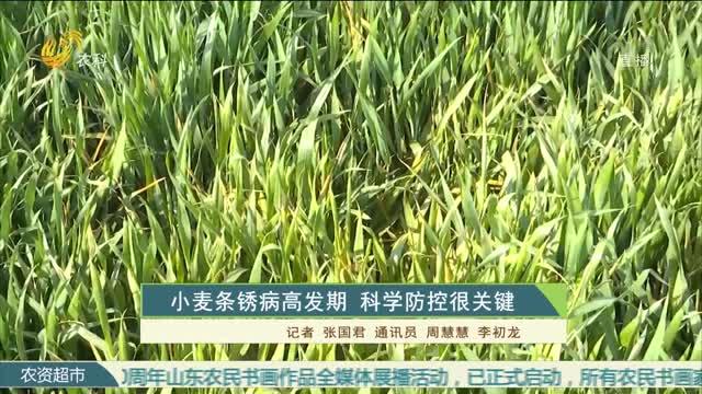 小麦条锈病高发期 科学防控很关键
