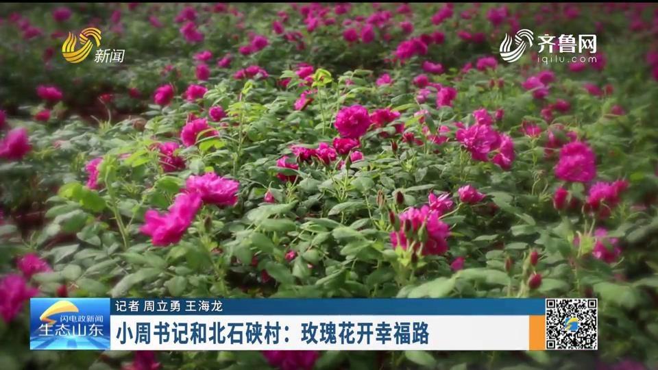 小周书记和北石硖村:玫瑰花开幸福路