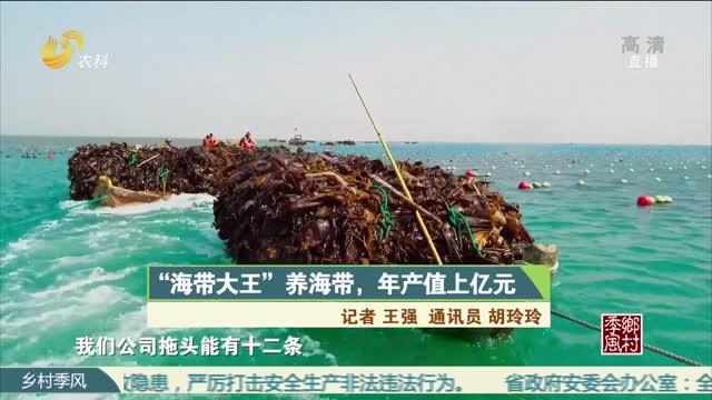 """""""海带大王""""养海带,年产值上亿元"""