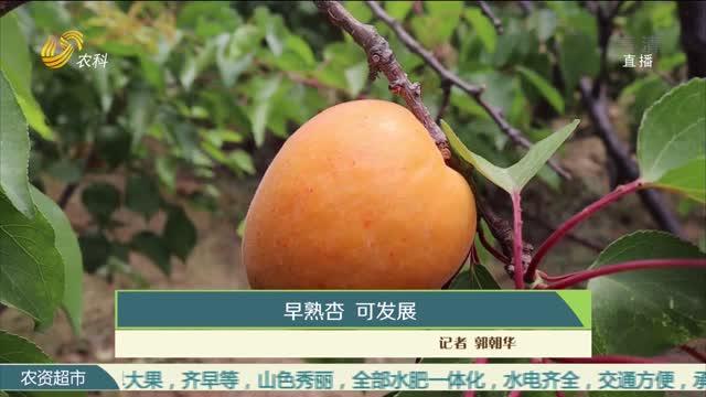 早熟杏 可发展