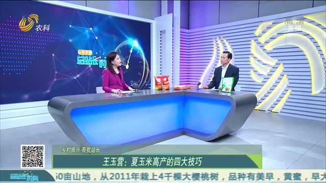 【乡村振兴 有我站长】王玉营:夏玉米高产的四大技巧