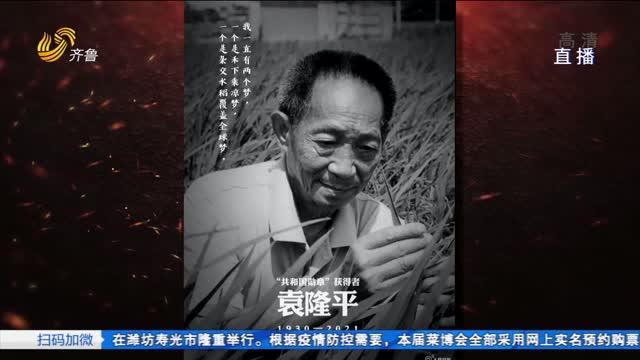 万亩稻花寄哀思:忆袁隆平和海水稻的故事