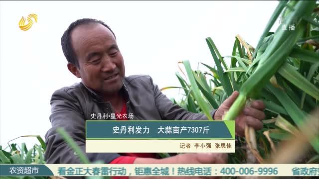 【史丹利·星光农场】史丹利发力 大蒜亩产7307斤