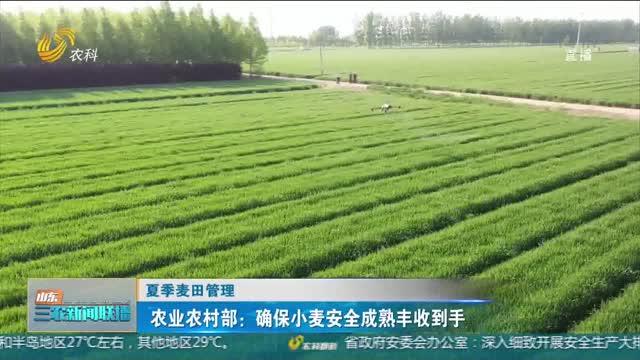 【夏季麦田管理】农业农村部:确保小麦安全成熟丰收到手