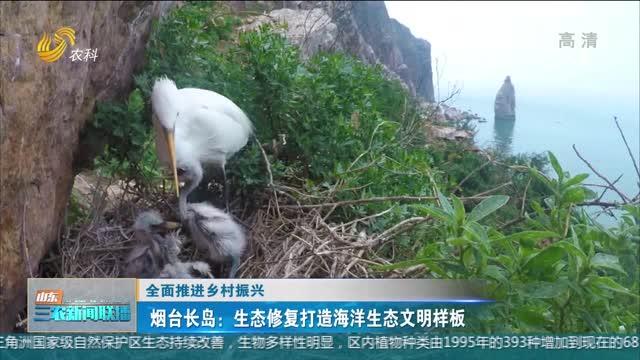 【全面推进乡村振兴】烟台长岛:生态修复打造海洋生态文明样板
