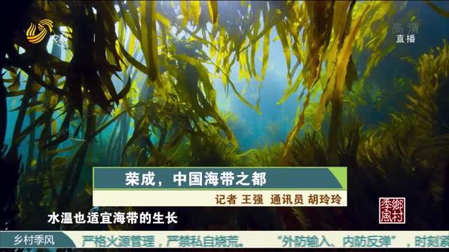 荣成,中国海带之都